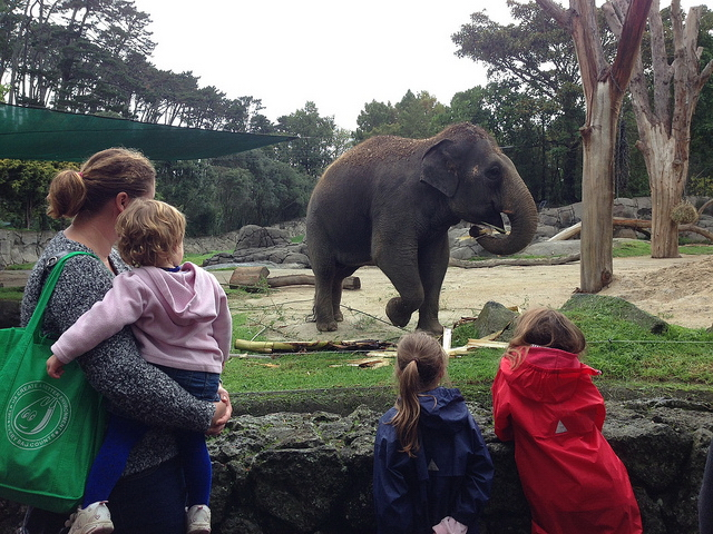 奥克兰动物园