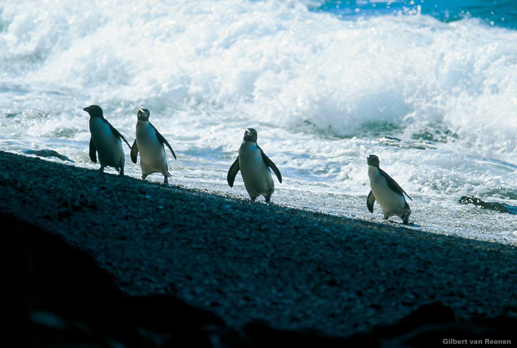 那些受欢迎的新西兰野生动物体验
