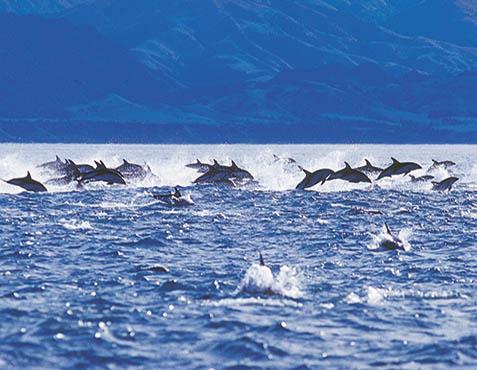 新西兰旅游景点,新西兰景点,新西兰南岛景点,凯库拉景点,凯库拉观海豚
